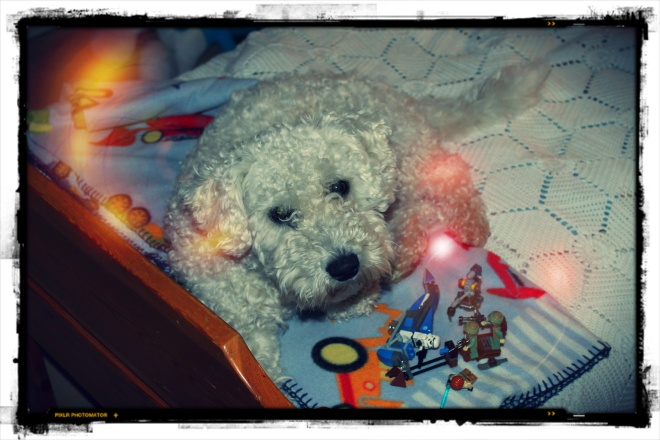 R2-DogDo